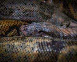 Garoto é atacado e morto por cobra no Rio Grande do Sul
