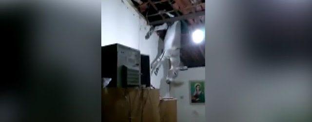Jumento sobe em telhado de casa em Cajazeiras, Sertão da PB