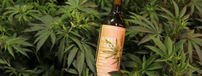 Empresa lança vinho à base de maconha com zero álcool e que não dá ressaca